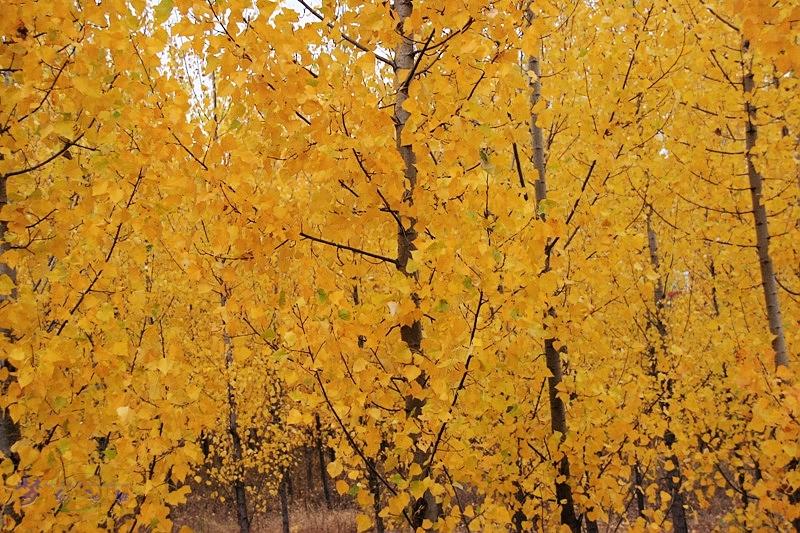 一路风景:乡村的秋天-梦幻池塘-搜狐博客