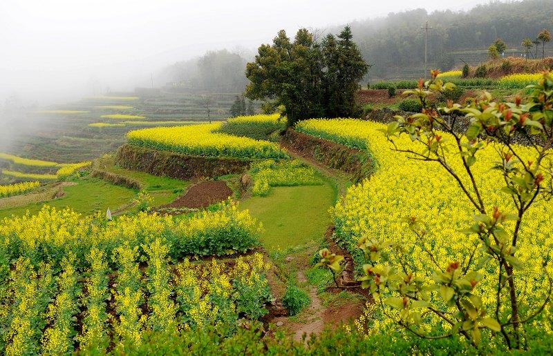 溧水县茶叶实验场风景