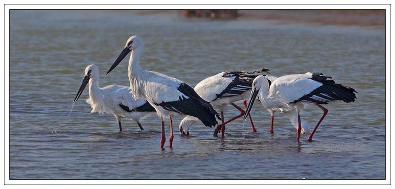 黄河口湿地生态旅游区——鸟岛