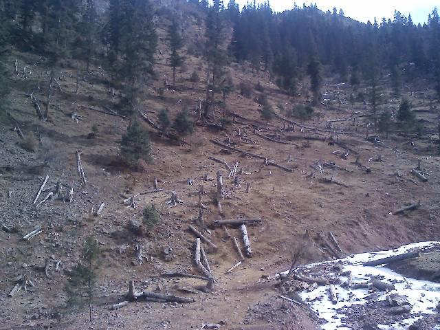 早些年被砍伐光的森林