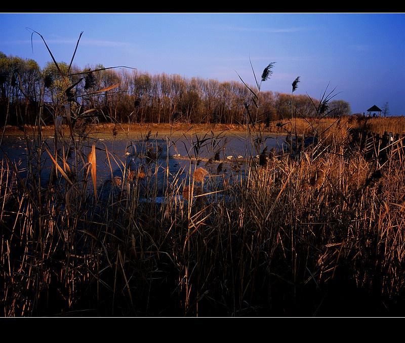 西沙湿地--上海崇明岛