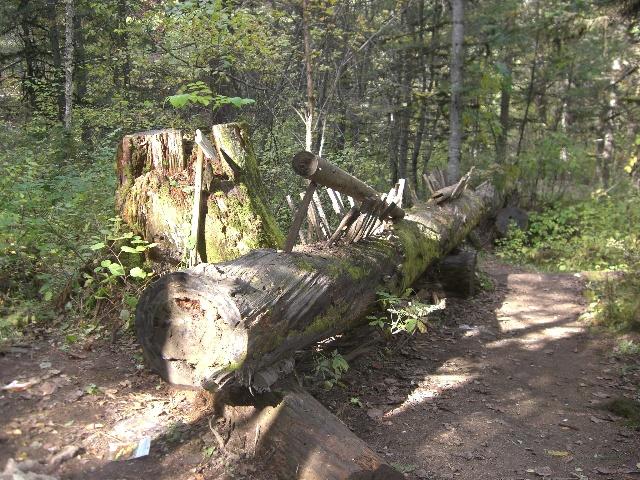 原始森林公园秋日一路游