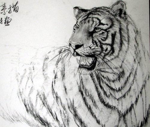 可爱老虎简单铅笔画