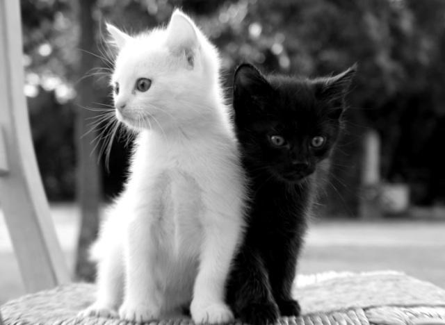 母猫和小猫