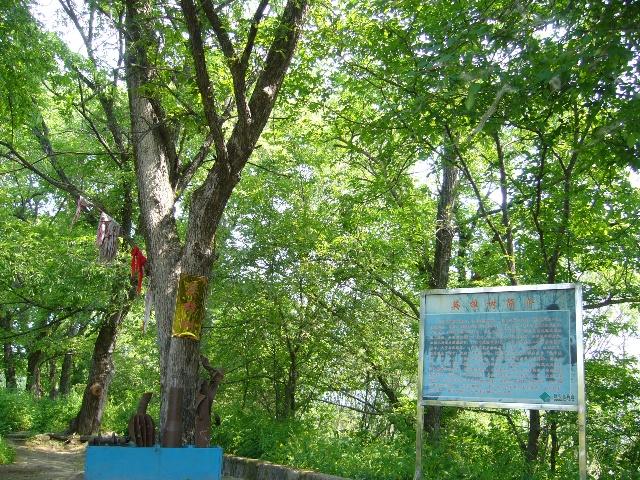 """修建有营房,珍宝岛大门,还有珍宝岛历史事件的见证:""""英雄树"""",是一处名"""