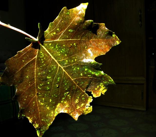 秋天的树叶_秋天的树叶形状_秋天树叶有 .
