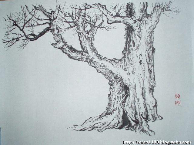 树木写生素描画
