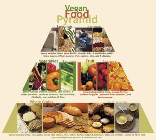 食物金字塔的英语海报