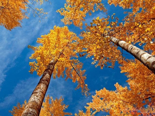 树叶飘飞的日子(歌词)
