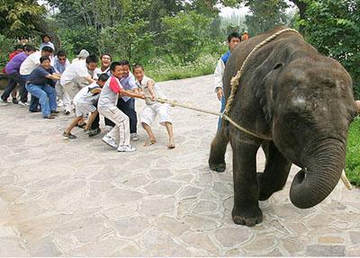 秦岭野生动物园: 沣峪口