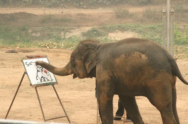 象是泰国的国宝 到了那里当然要去看一看喽