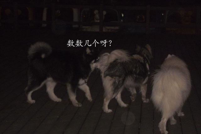 夜晚工作的动物图片