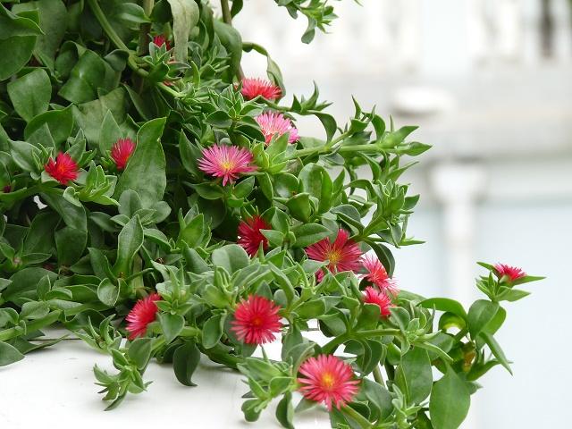 小红花的剪法步骤图展示