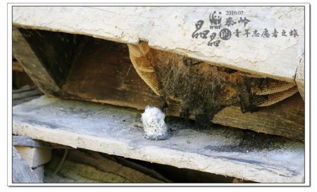 2) 冬天的时候,圆蜂桶保温效果也不好,蜜蜂很容易冻死.