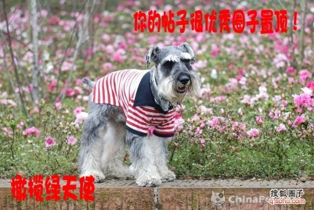 zooskool八狗一女-宠物乐园 喜爱动物 热爱生活