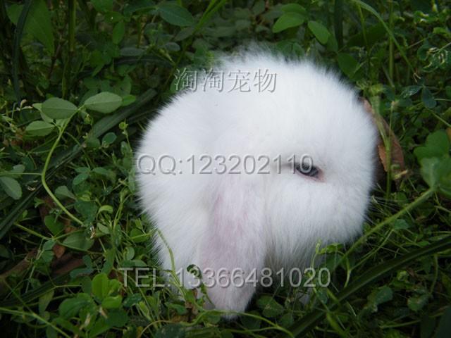 兔小白 小小白素颜动漫k小白小黑图片你好呀图片信息百科网 高清图片