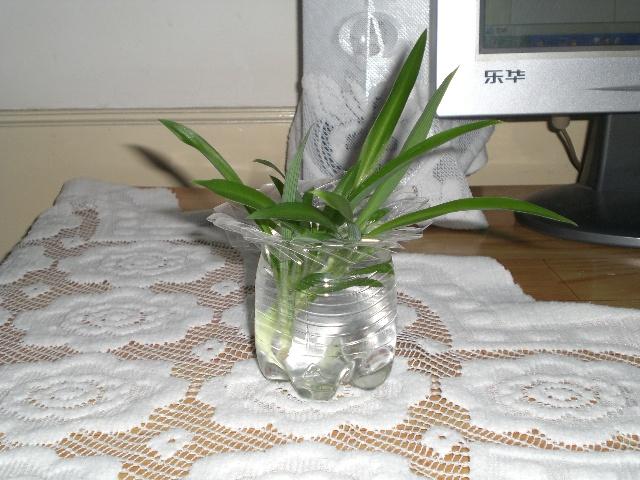 可乐瓶做花瓶_用可乐塑料瓶做的美丽花瓶(个人作品)-暖暖的烛火-搜狐博客