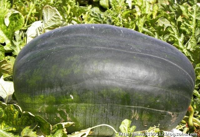 超级大西瓜块展示
