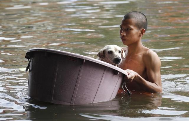 [转载]泰国洪水中救助动物的温情画面