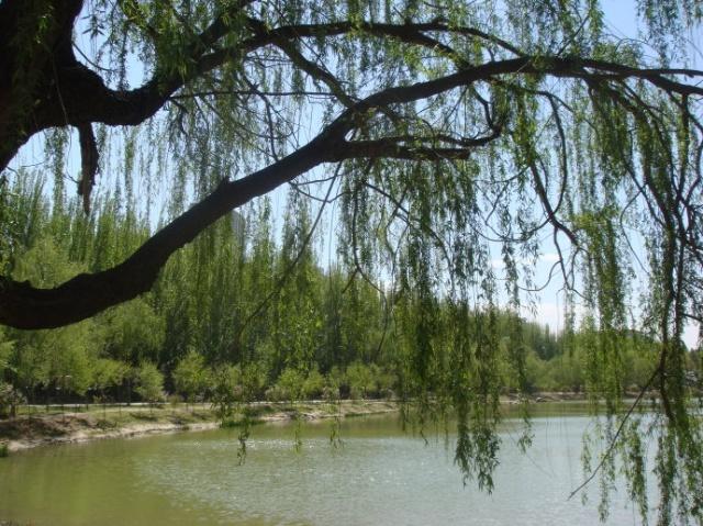 壁纸 垂柳 风景 柳树 摄影 树 桌面 640_479