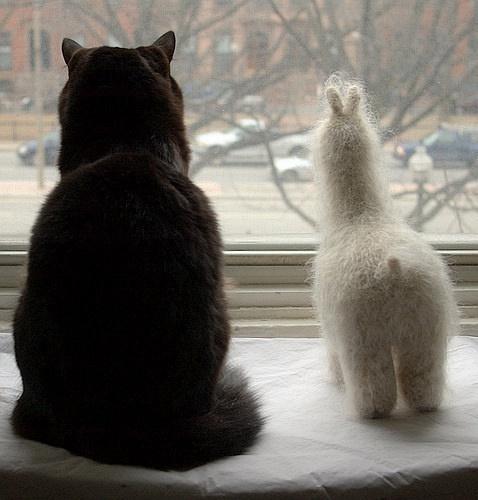 家有贱猫其乐无穷